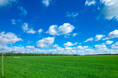 Foto op Canvas Groene field of grass and perfect sky