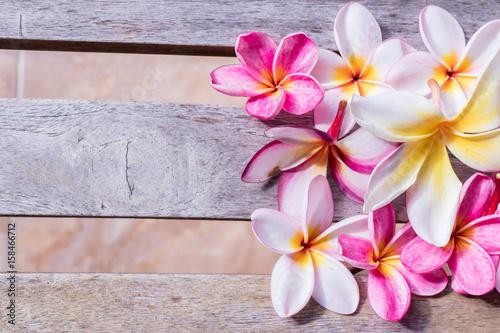 Fotobehang Plumeria Plumeria flower pink and white frangipani tropical flower, plumeria flower bloominge, spa flower, Bali island.