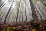 Mystic morning foggy forest landscape