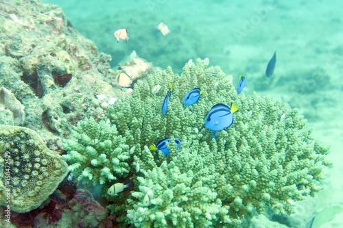 Staande foto Groene koraal 海中写真