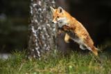 Flying fox - 158476705