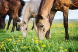 Mare with a foal on a pasture. - 158516982
