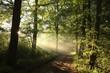 Rural road through a foggy spring forest