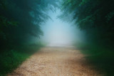 path in foggy forest