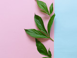 Green leaves and flowers on a colored background. Nature concept, top view