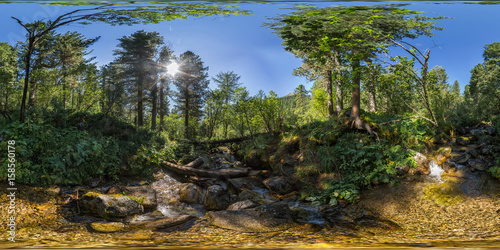 Spherical panorama 360 180 creek in a dense green forest Poster