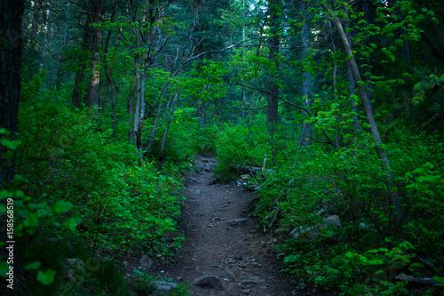 Papiers peints Route dans la forêt dark_moody_path