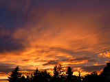 Vibrant orange sunset with silhouette of trees.