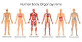 Medical Education Chart of Biology for Human Body Organ System Diagram - 158571183