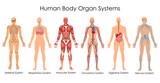 Medical Education Chart of Biology for Human Body Organ System Diagram - 158571183