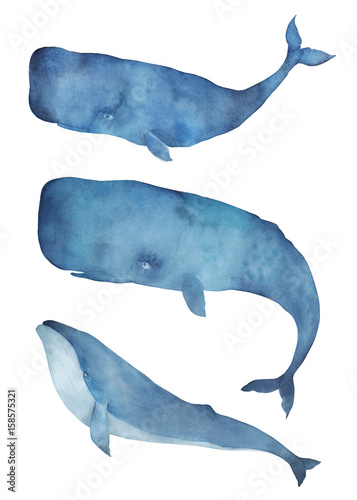 Watercolor whale set. Isolated illustration