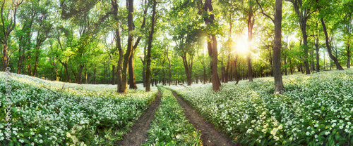 Panorama of Forest green landscape with white flowers and path - 158577990