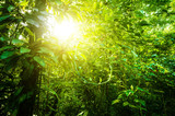 Natural tropical forest