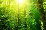 Natural tropical jungle