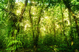 Fantastic tropical green forest