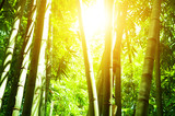 Asian bamboo forest and sun light