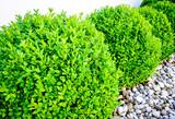small bush - 158612113