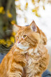 Amazing Maine Coon Cat in the Park, Autumn, Vertical View