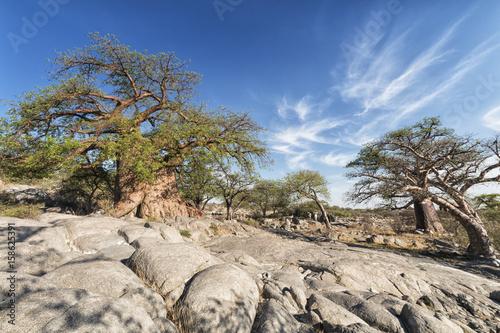 Fotobehang Baobab Baobab landscape