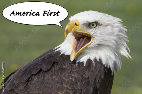 america´s first eagle Poster
