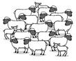Viele Schafe und Lämmer als Schafherde - 158626735