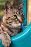 chat dans le jeu extérieur