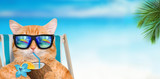 Cat wearing sunglasses relaxing sitting on deckchair in the sea background.