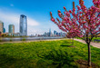 Cherry Blossom Jersey