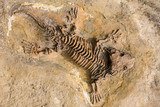 Skeleton fossil record of ancient reptile in stone