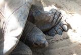 Tartaruga secolare in spiaggia