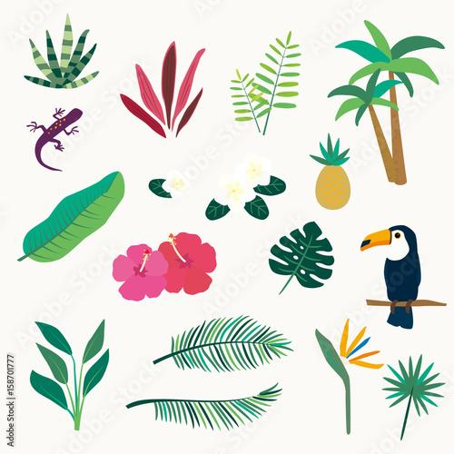 Zestaw ikon tropikalnych