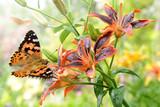 Schmetterling 269