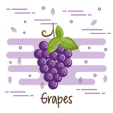 Colorful grapes design over white background vector illustration