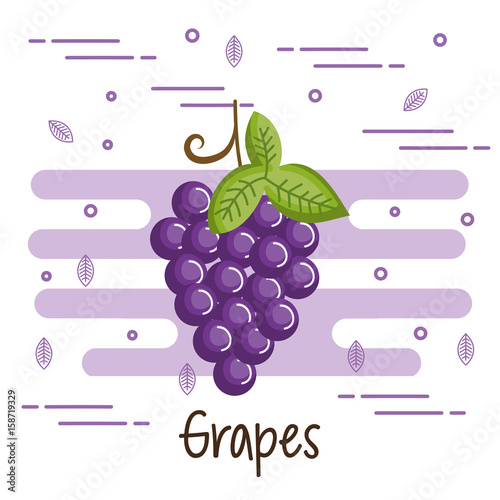 Colorful grapes design over white background vector illustration - 158719329