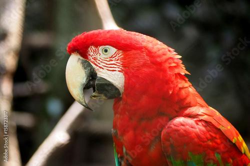perroquet-de-la-foret-amazonienne