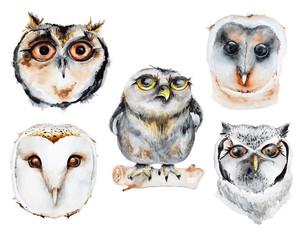 Watercolor owls set