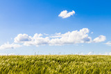 Chmury na błękitnym niebie podczas sianokosów, zboże na polu