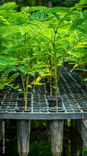 plant seedling in the nursery