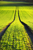Lush green agricultural field with tractor tracks