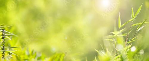 Fotobehang Bamboe Grüner Hintergrund mit Bambus