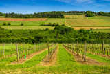 vignes de Hautes Côtes - 158867729