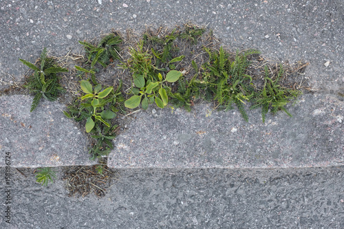 Weeds Growing on Sidewalk Poster