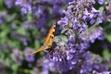 A butterfly on light blue flowers
