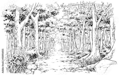 漫画風ペン画イラスト 森 - 158936155