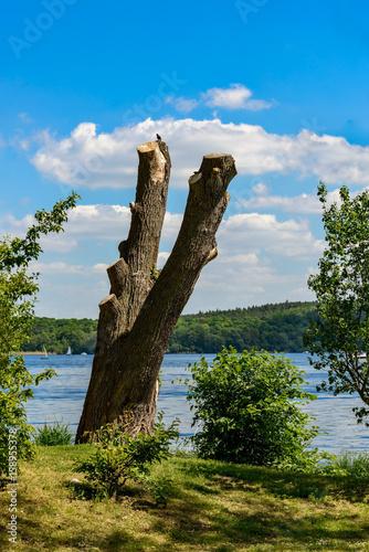 Toter Baum mit Vogel am Ufer des Templiner Sees Poster