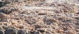 Textura de roca de la playa