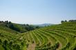 Panorama of beautiful landscapes of valdobbiadene