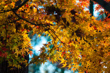 Autumn is approaching and for many photographers, it's their favorite season for taking pictures. With the vibrant colors and cool air comes ideal times to capture the beauty that Autumn brings.