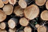 Wood after logging