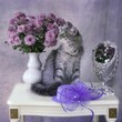Still life with chrysanthemums and kitten